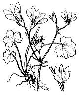 Photographie n°1415 du taxon