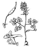 Photographie n°142 du taxon