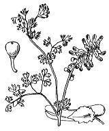 Photographie n°144 du taxon