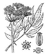 Photographie n°1500 du taxon