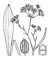 Photographie n°1580 du taxon