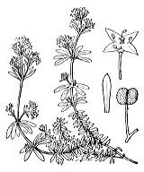 Photographie n°1702 du taxon