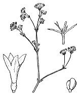 Photographie n°1717 du taxon