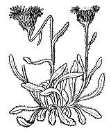 Photographie n°1796 du taxon