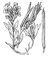 Photographie n°186 du taxon