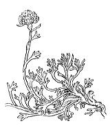Photographie n°1911 du taxon