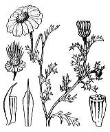 Photographie n°1953 du taxon