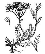 Photographie n°1974 du taxon