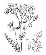 Photographie n°1979 du taxon