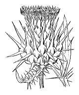 Photographie n°2002 du taxon