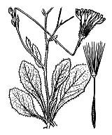 Photographie n°2131 du taxon