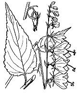Photographie n°2361 du taxon