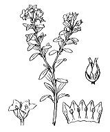 Photographie n°2382 du taxon