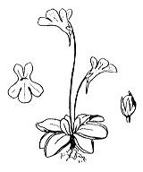 Photographie n°2398 du taxon