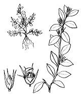 Photographie n°2453 du taxon