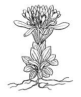 Photographie n°2483 du taxon