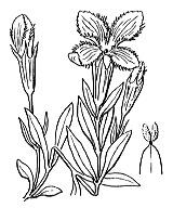 Photographie n°2500 du taxon