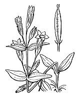 Photographie n°2503 du taxon