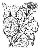 Photographie n°255 du taxon