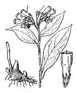Photographie n°2550 du taxon
