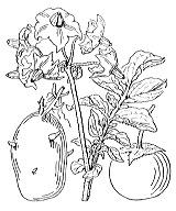 Photographie n°2624 du taxon