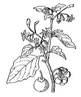 Photographie n°2627 du taxon