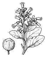 Photographie n°2635 du taxon