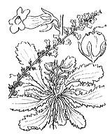 Photographie n°2672 du taxon