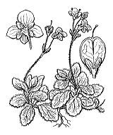 Photographie n°2718 du taxon