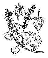 Photographie n°2720 du taxon