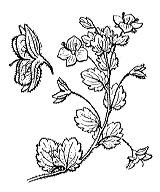 Photographie n°2728 du taxon
