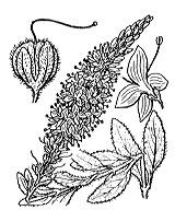 Photographie n°2748 du taxon