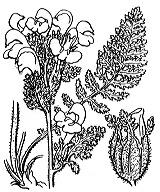 Photographie n°2789 du taxon