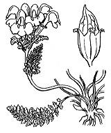 Photographie n°2793 du taxon