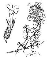 Photographie n°2871 du taxon