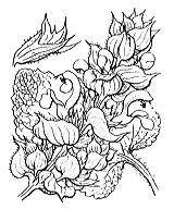 Photographie n°2888 du taxon