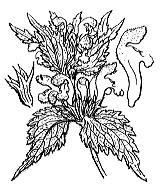 Photographie n°2909 du taxon