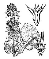 Photographie n°2927 du taxon