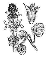 Photographie n°2929 du taxon