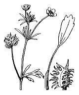 Photographie n°31 du taxon