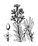 Photographie n°3170 du taxon