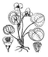 Photographie n°3344 du taxon