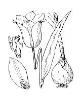Photographie n°3371 du taxon
