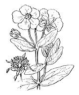 Photographie n°353 du taxon
