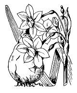 Photographie n°3556 du taxon