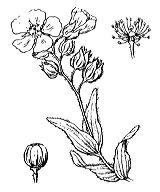 Photographie n°360 du taxon