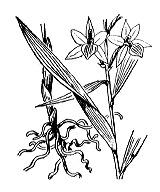 Photographie n°3631 du taxon