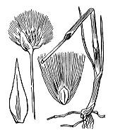 Photographie n°3763 du taxon