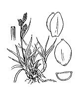 Photographie n°3846 du taxon