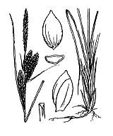 Photographie n°3849 du taxon